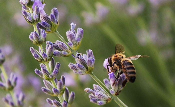 Manifiesto de las abejas madrileñas